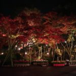修善寺へ紅葉狩りに行ってきた。紅葉の見頃は11月中旬から12月初旬頃