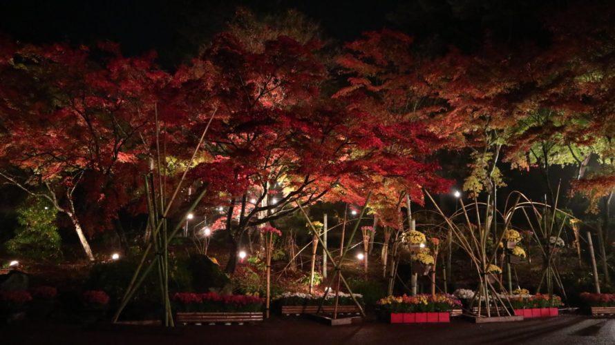 修善寺虹の郷「日本庭園」の紅葉ライトアップ